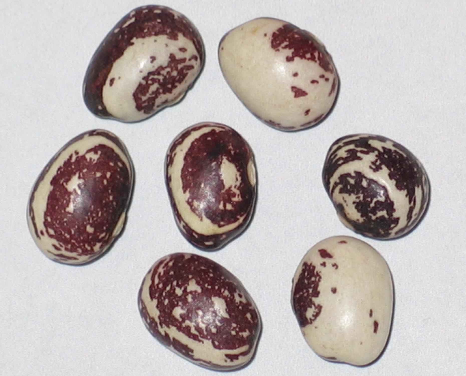 image of Good Mother Stallard beans