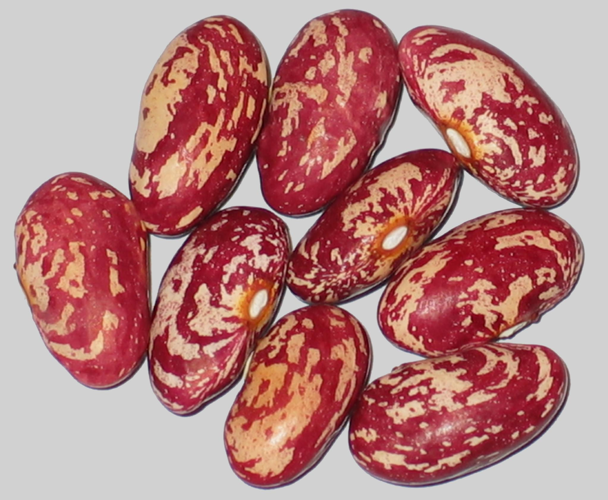 image of Grandma's Shell beans