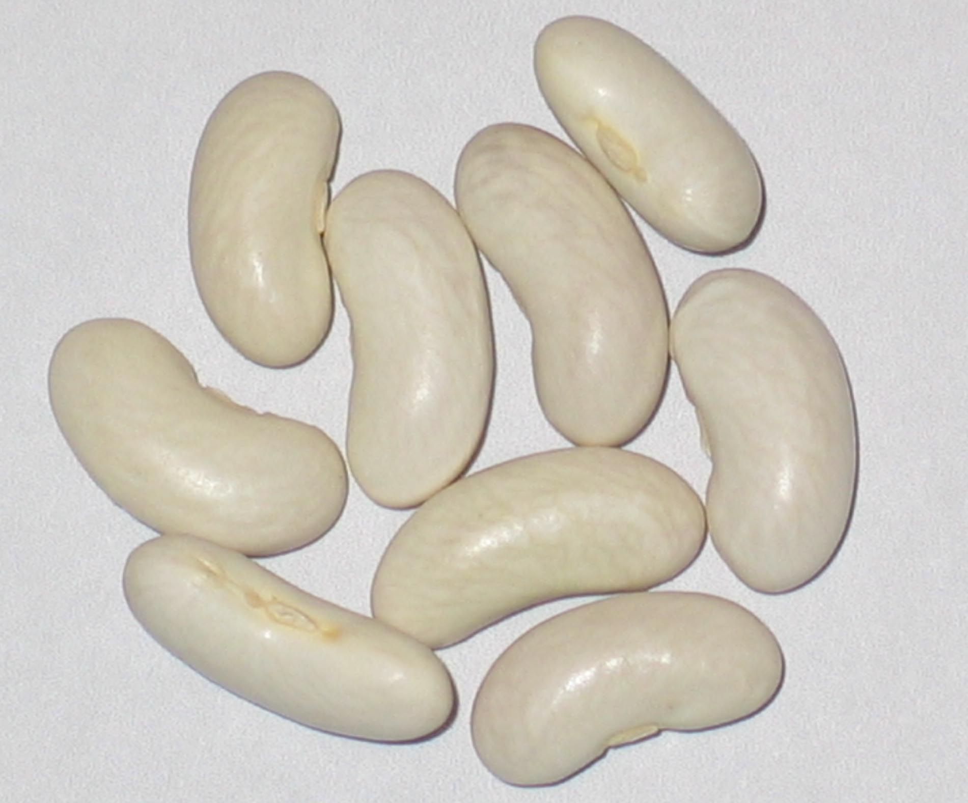 image of Greencrop beans