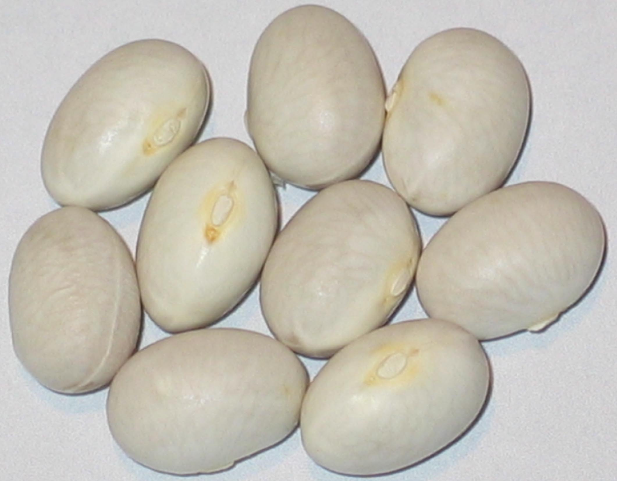 image of Heiling's Bean beans