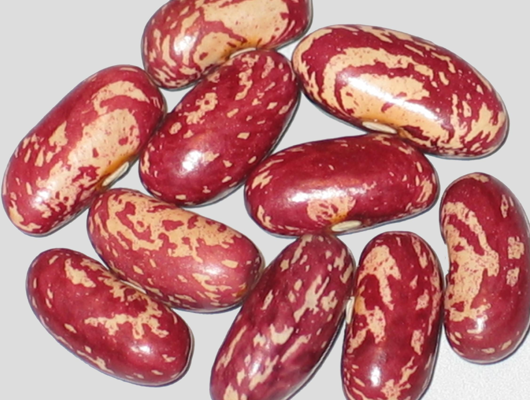 image of Hodson Wax beans