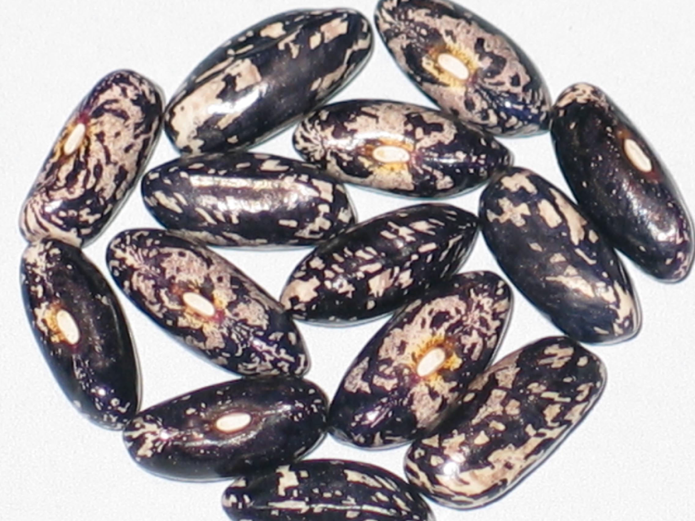 image of Idaho Refugee beans