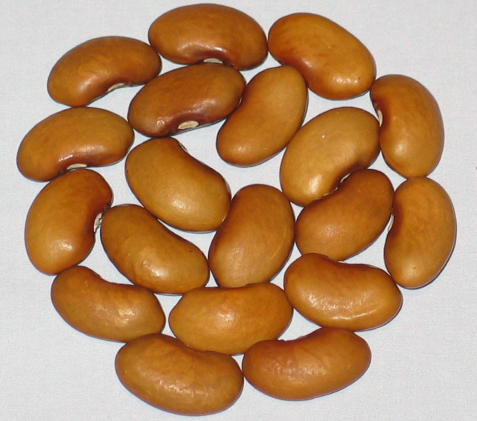 image of Improved Kidney Wax beans