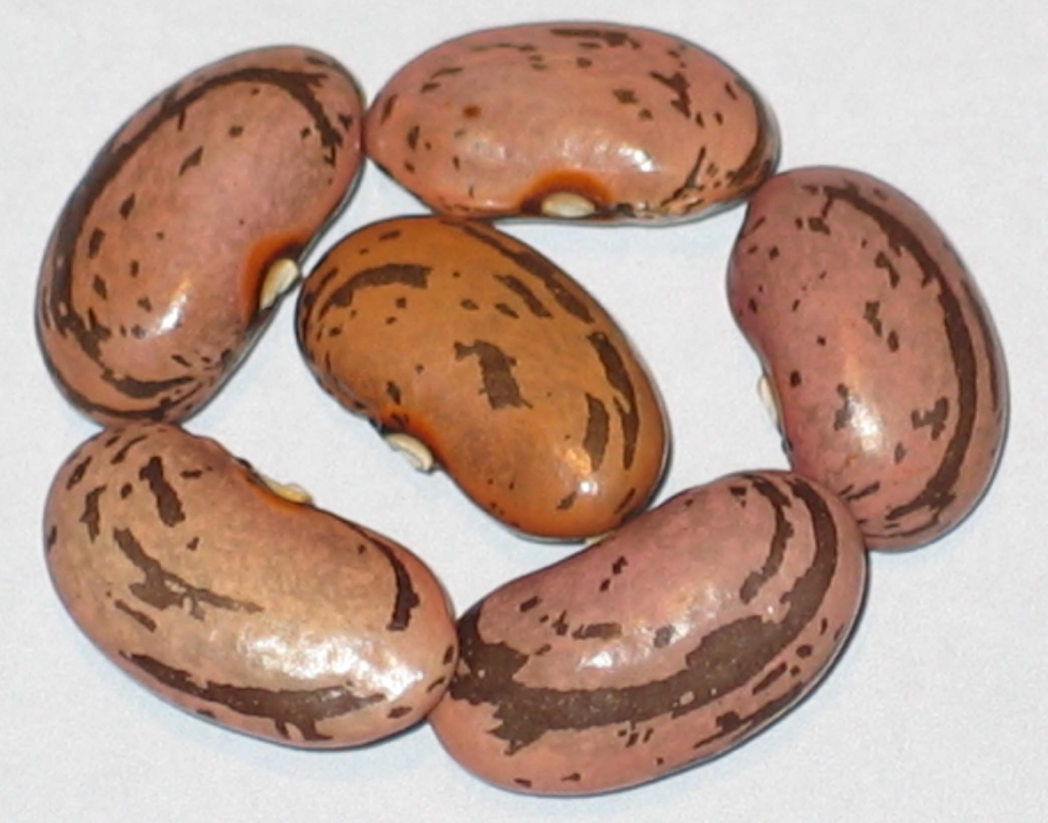 image of Jeminez beans
