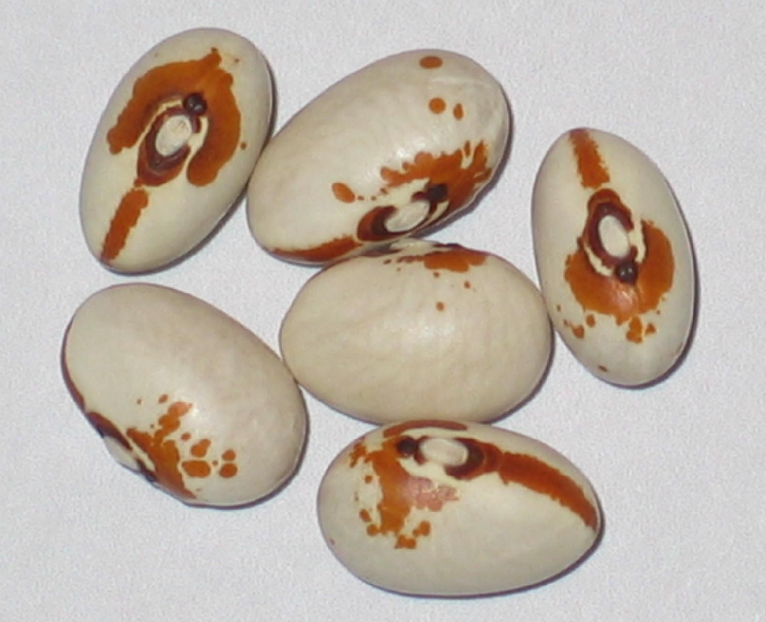 image of Kenearly beans