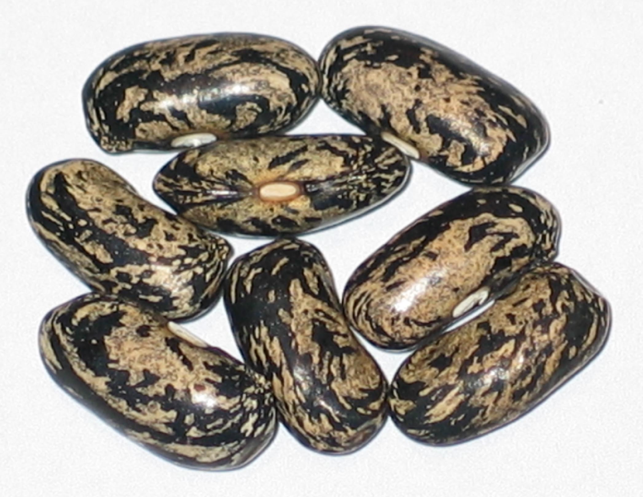 image of Kishwaukee Yellow beans