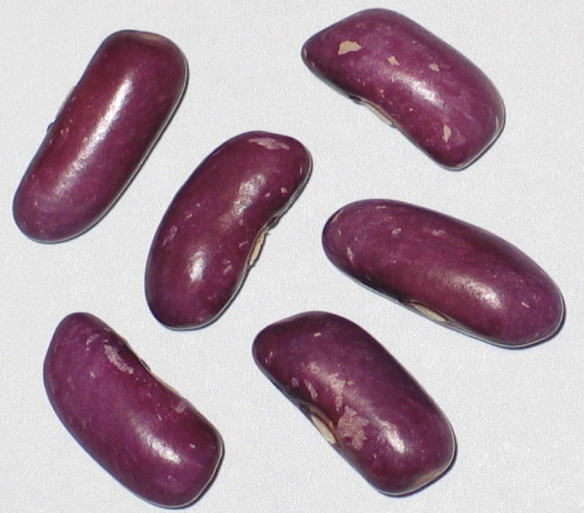 image of Koronis Purple beans
