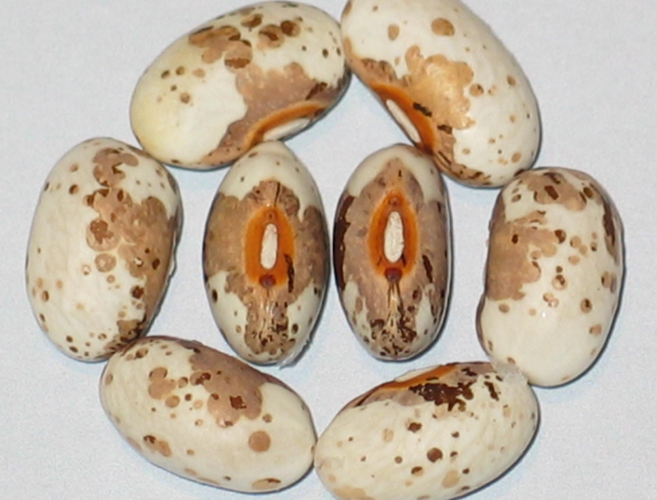 image of Koronis Three Islands beans