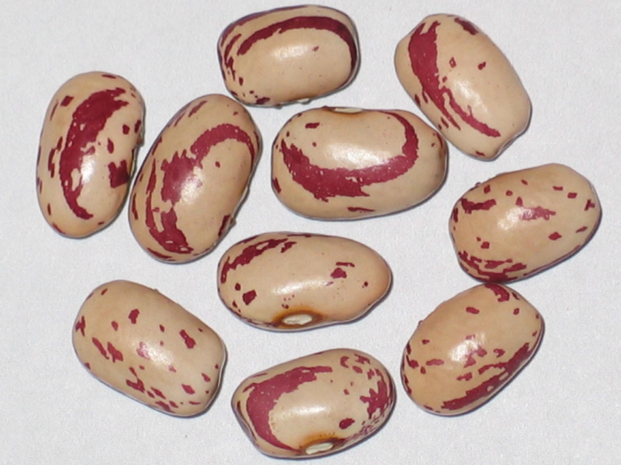 image of Lina Sisco Bird Egg beans