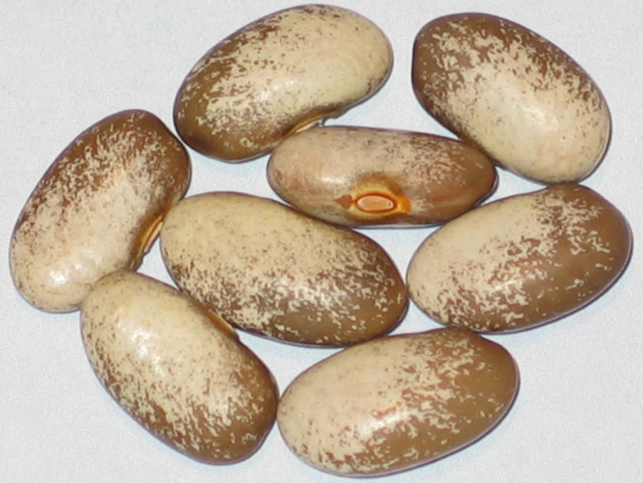 image of Logan Giant beans