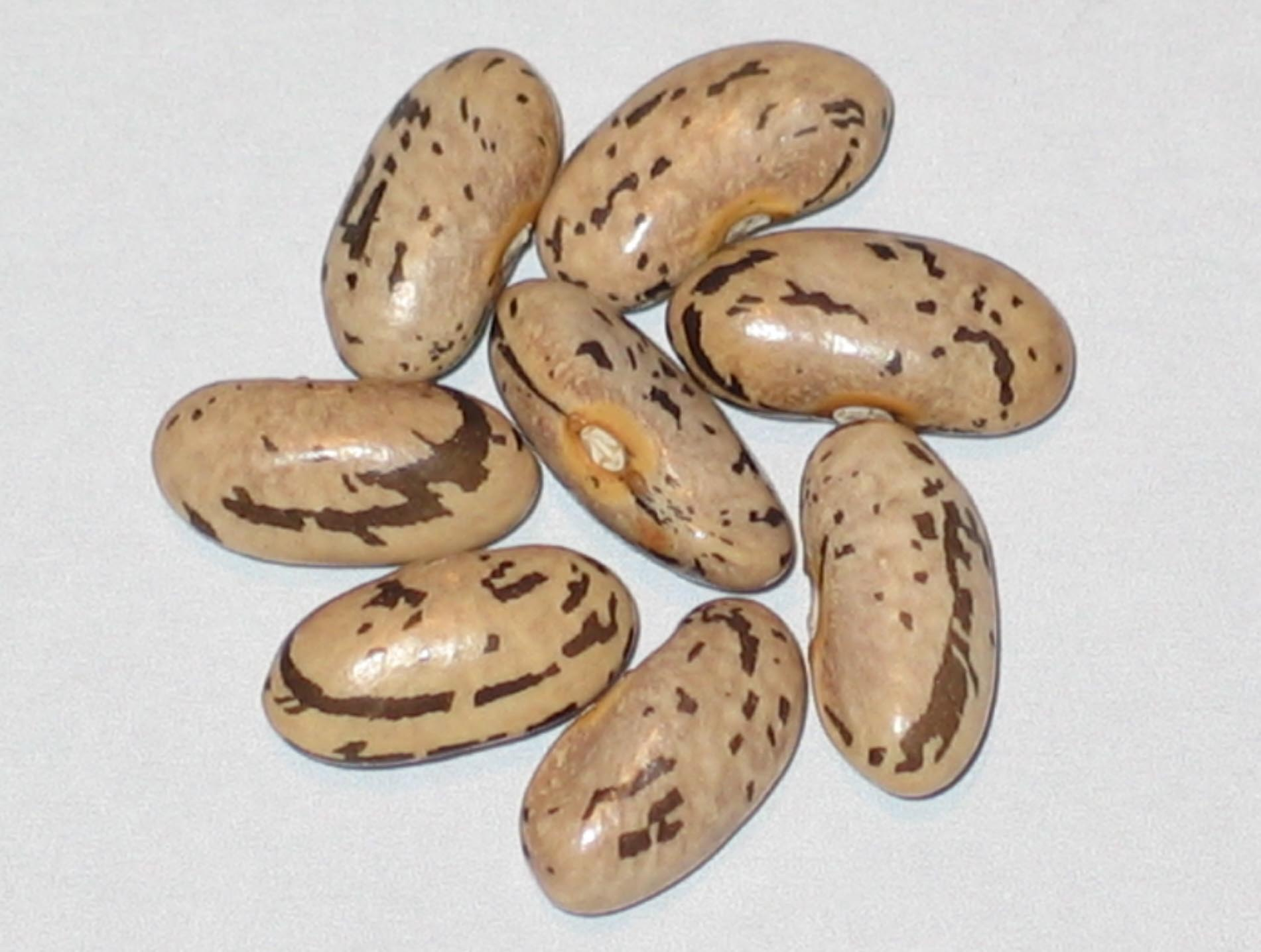 image of Louisiana beans