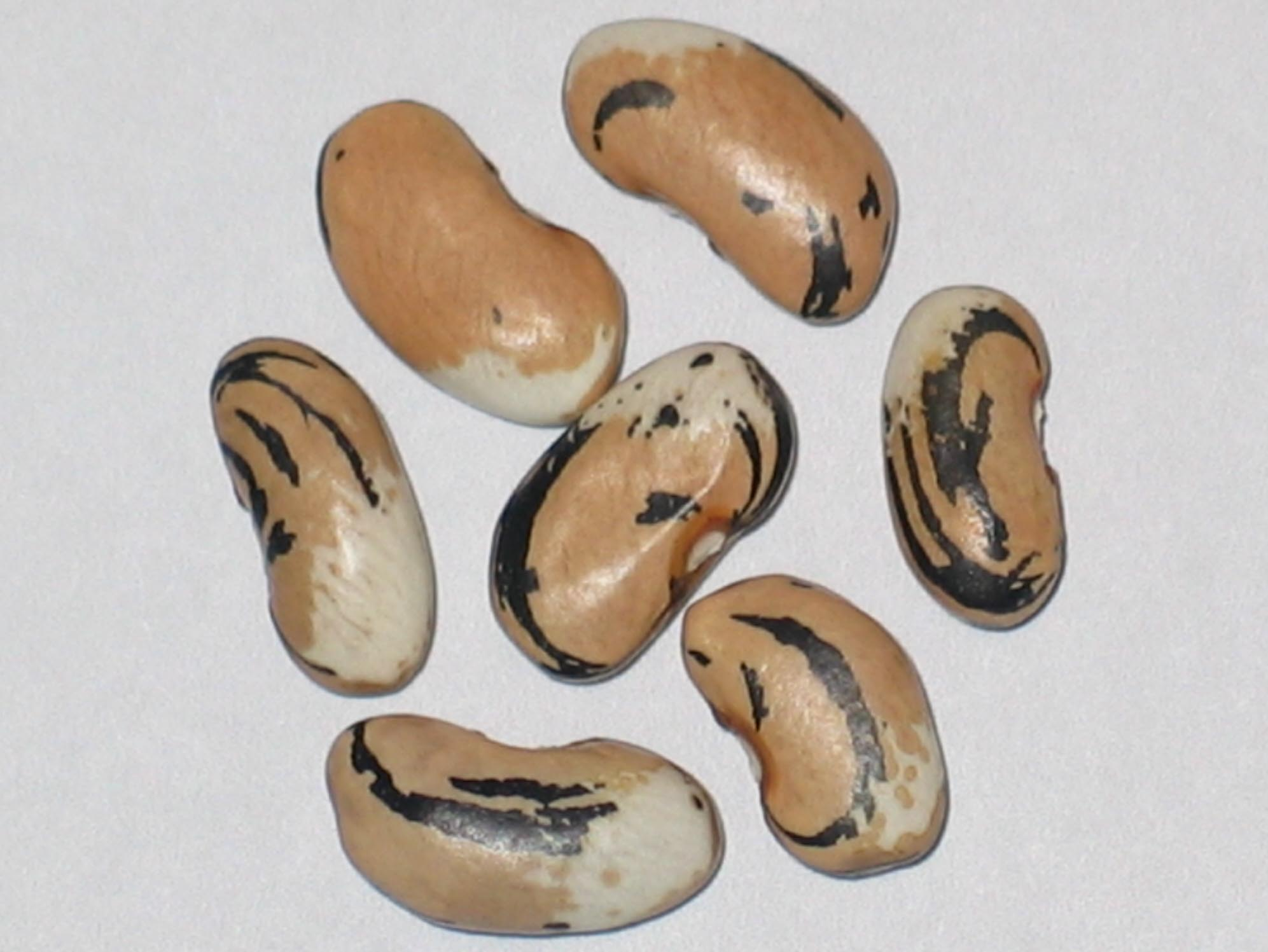 image of Maggies Cresent beans