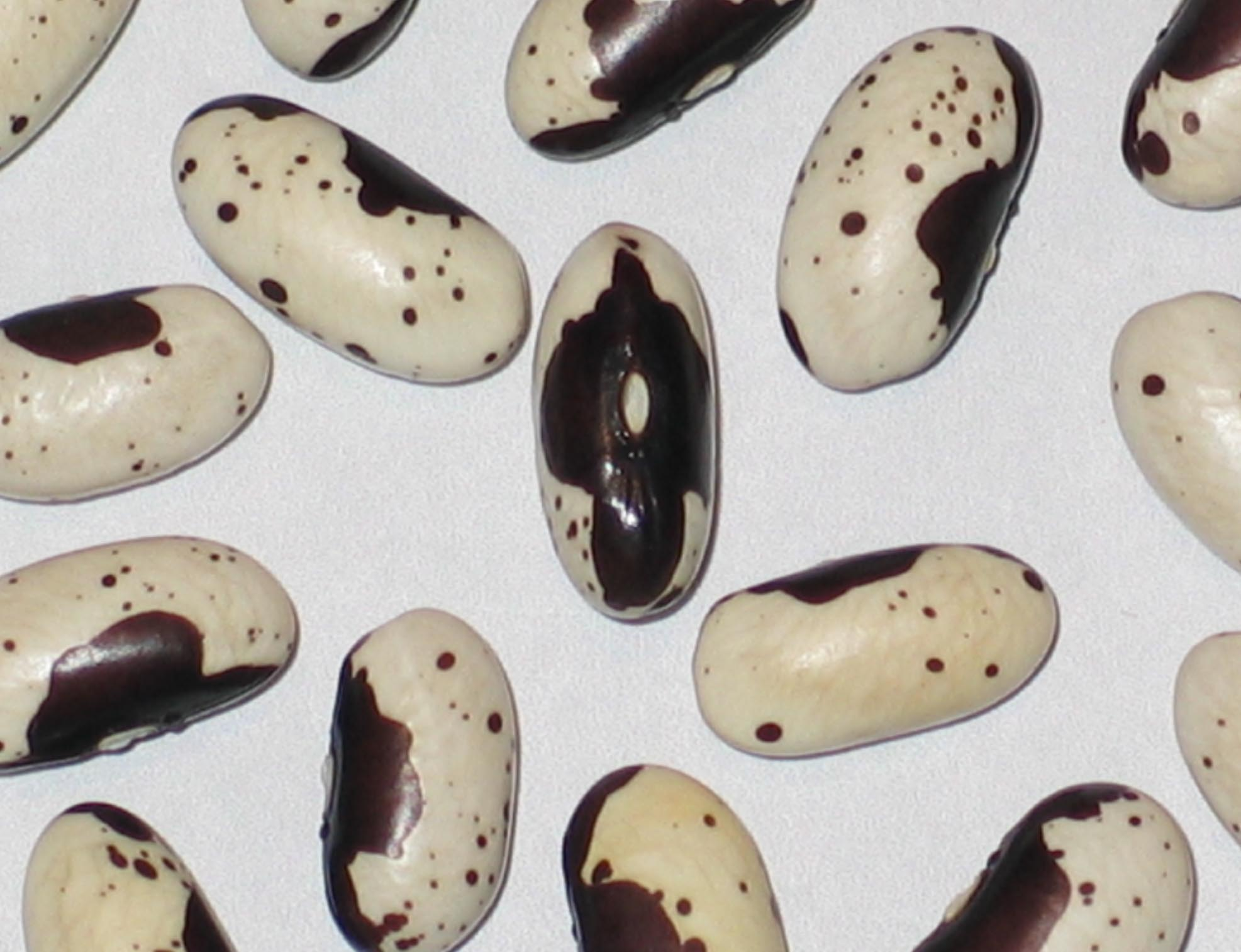 image of Marico beans
