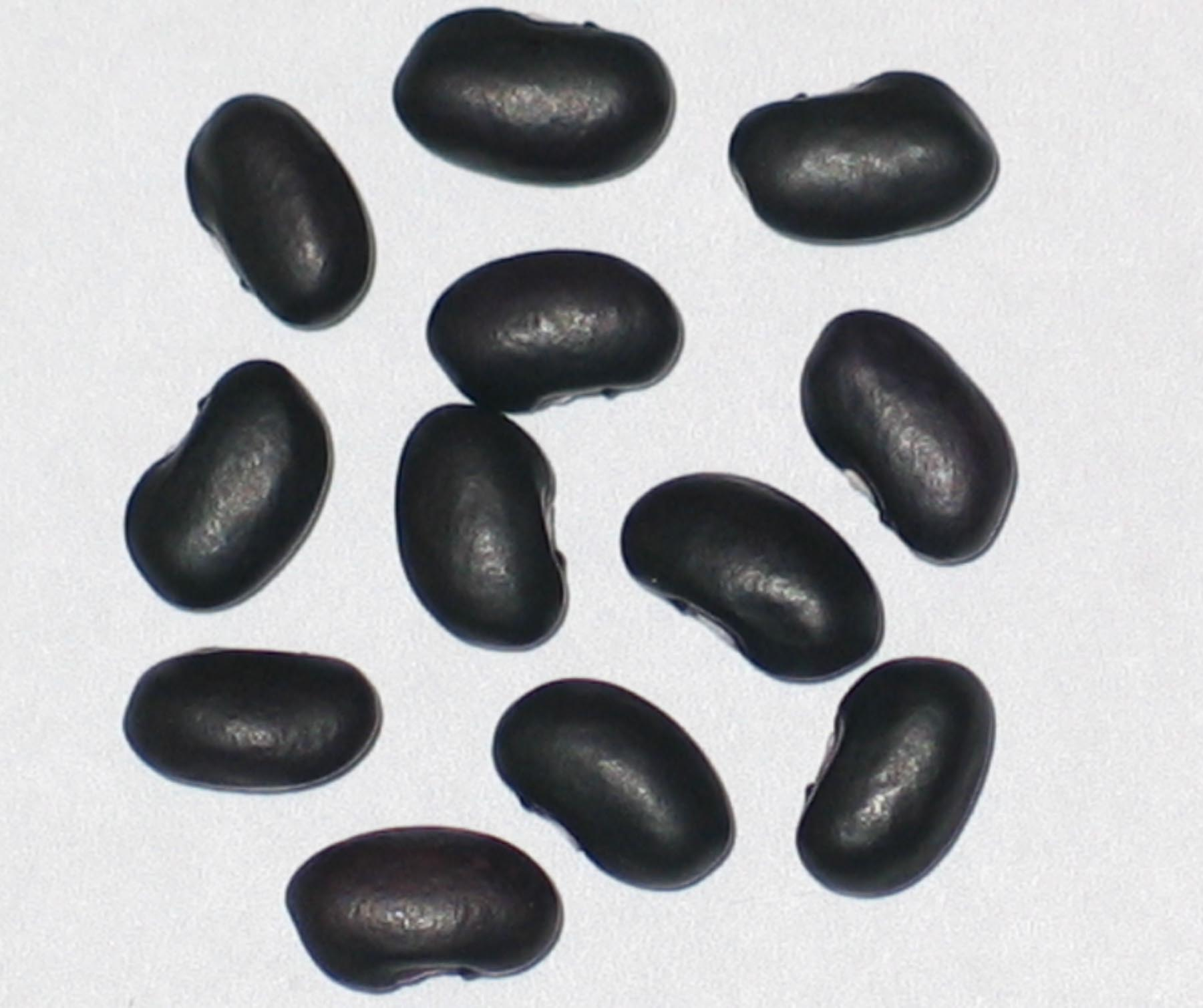 image of Midnight Black Turtle Soup beans