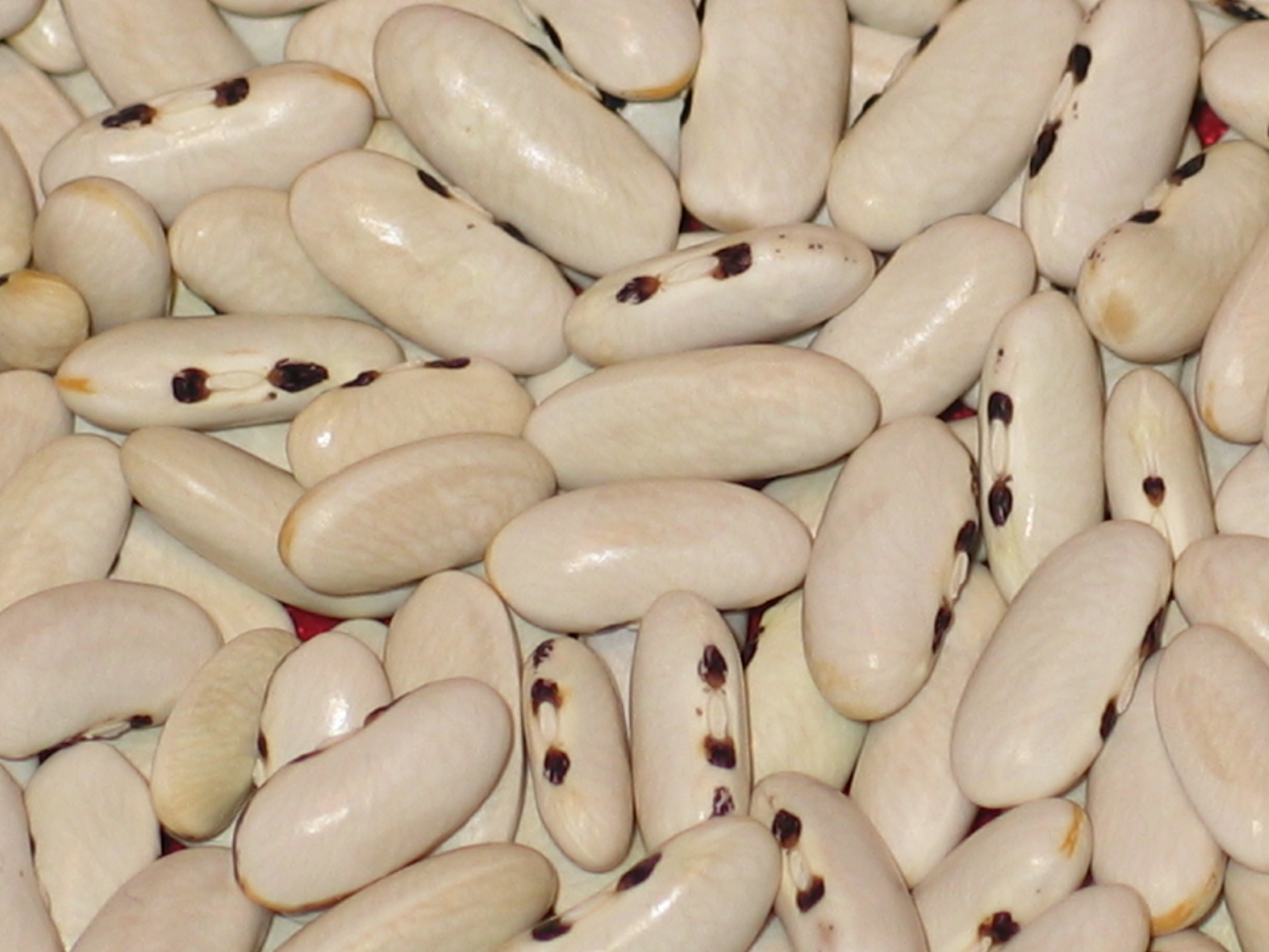 image of Mulldoon beans