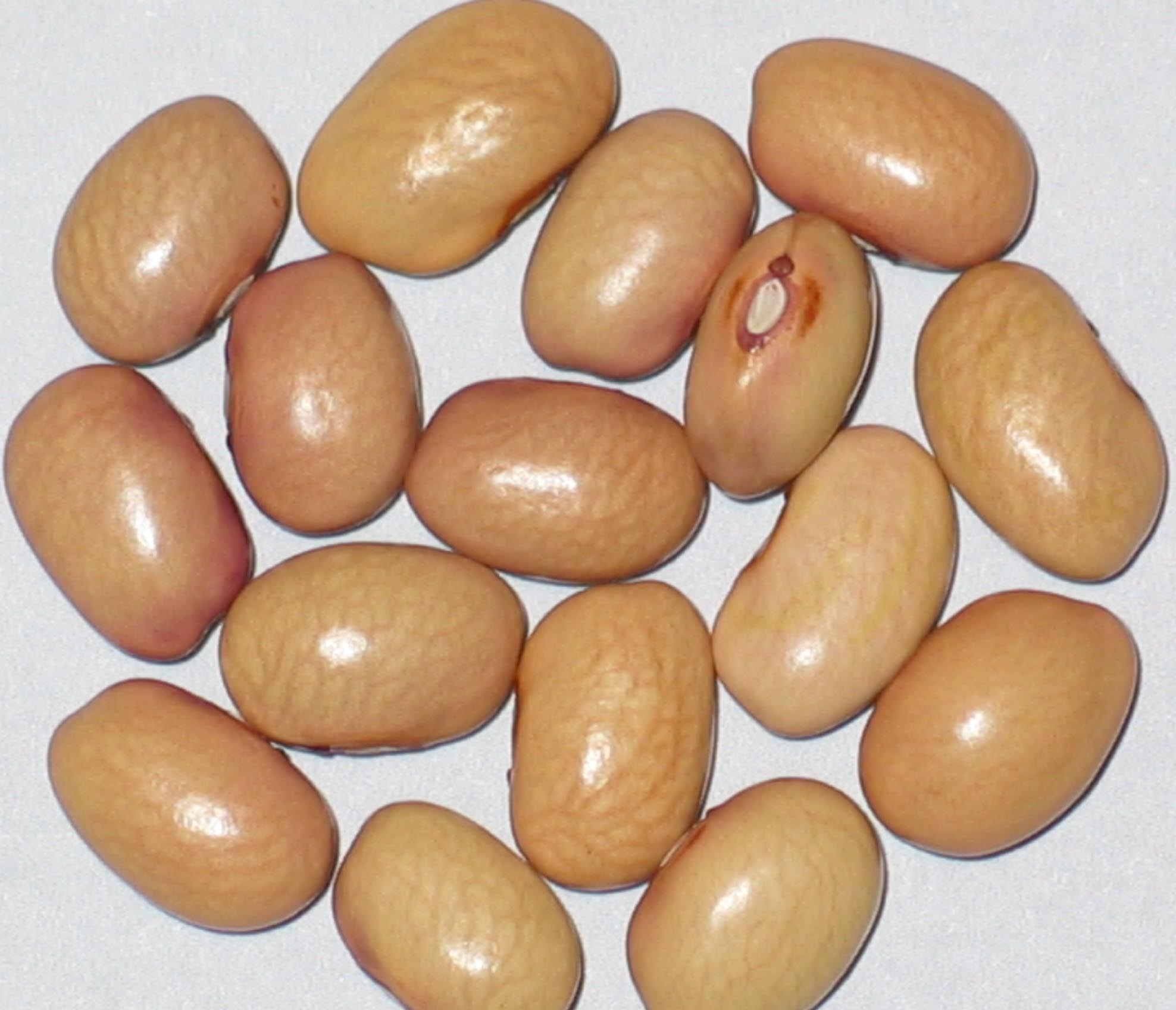 image of New Mexico Bolita beans