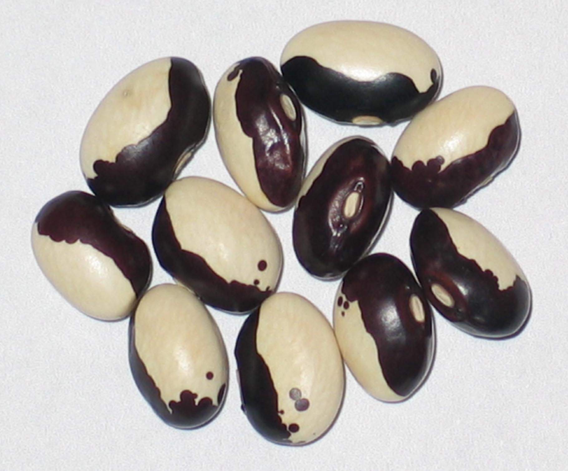 image of Orca beans