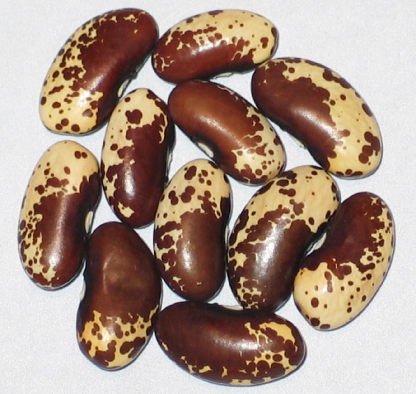 image of a Pawnee beans