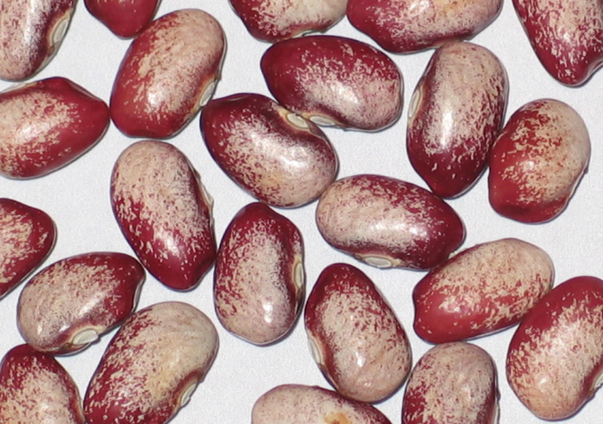 image of Penland Family beans