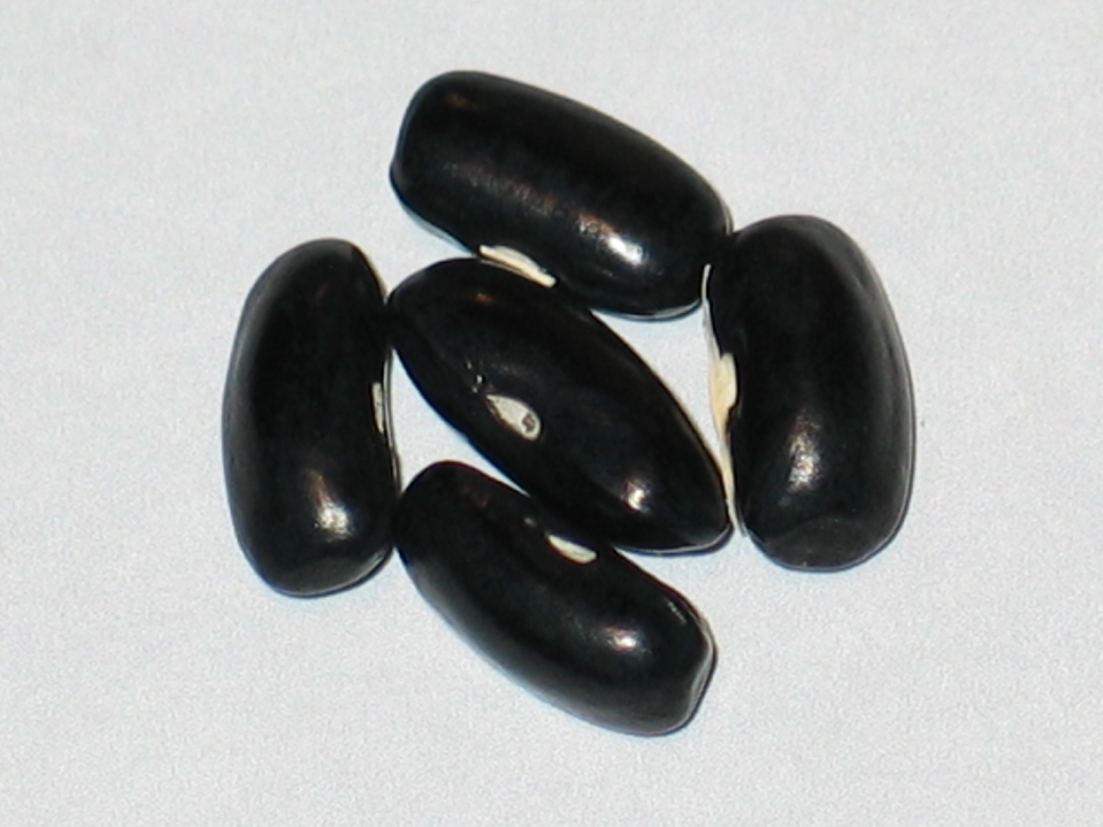 image of Prolific Black Wax beans