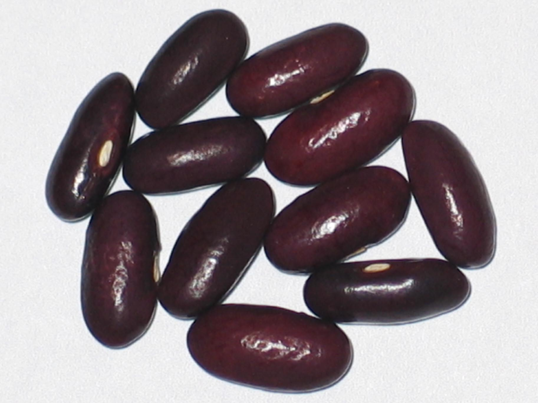 image of Provider beans