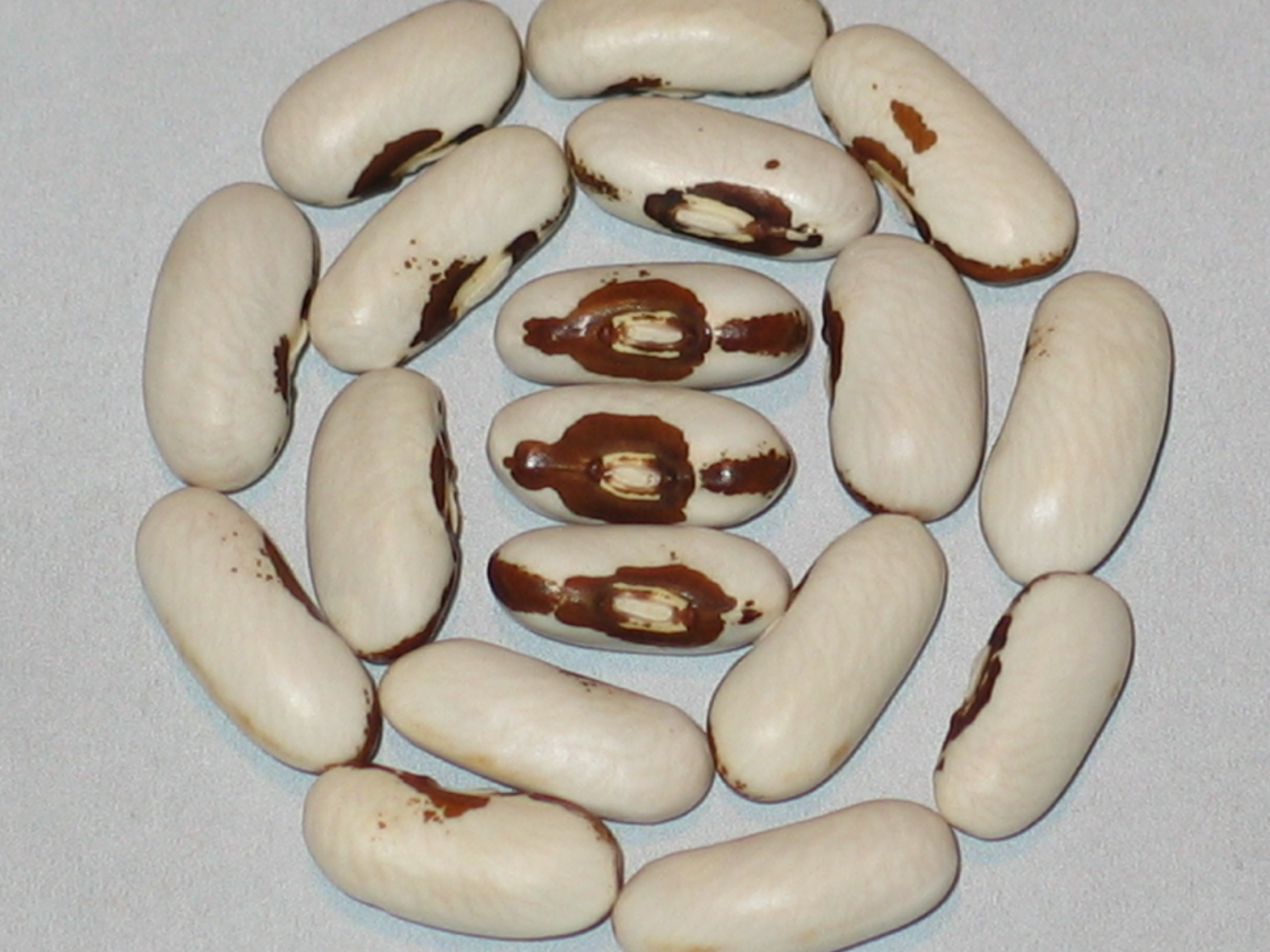 image of Puregold Wax beans