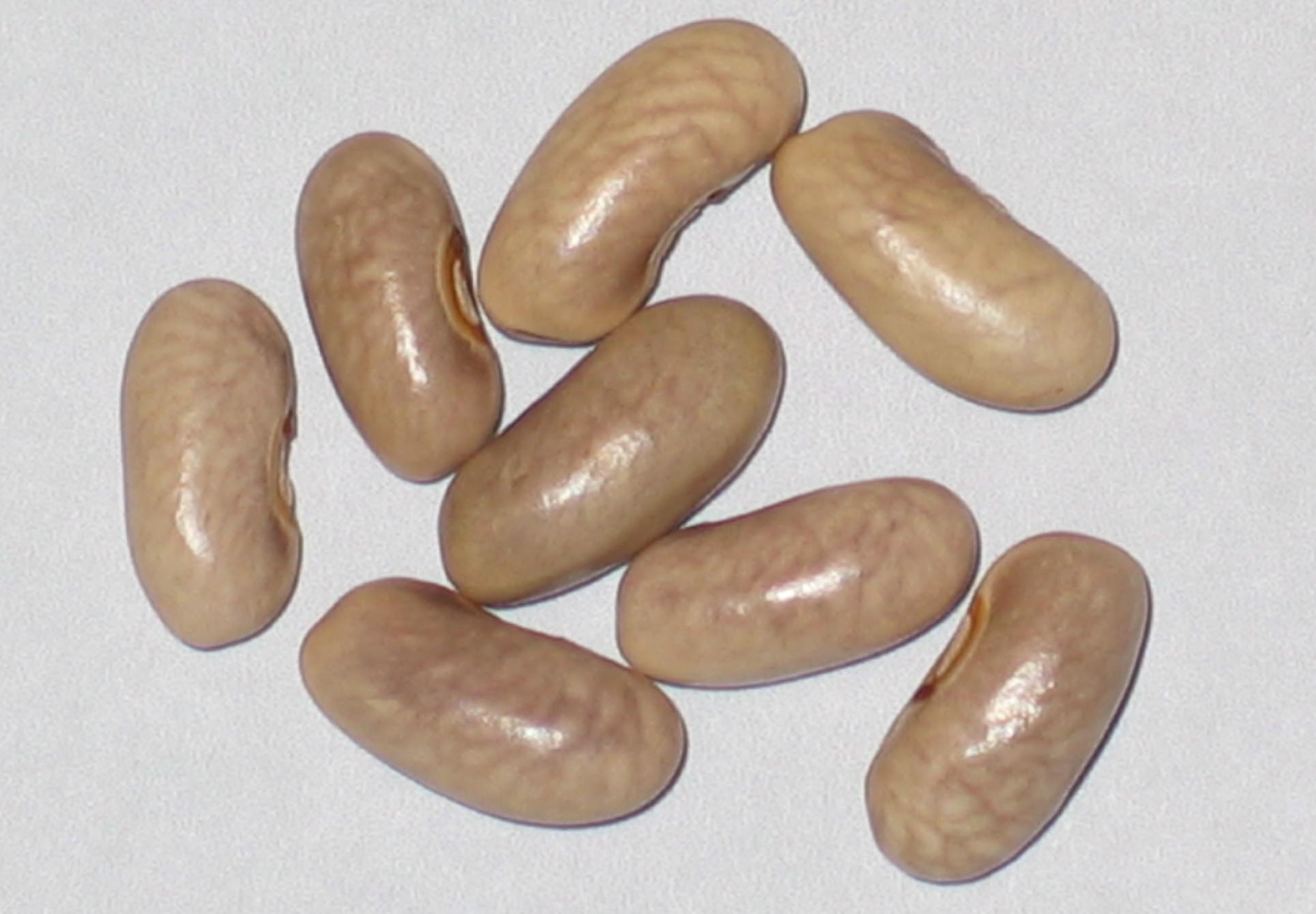 image of Purple Amazon beans