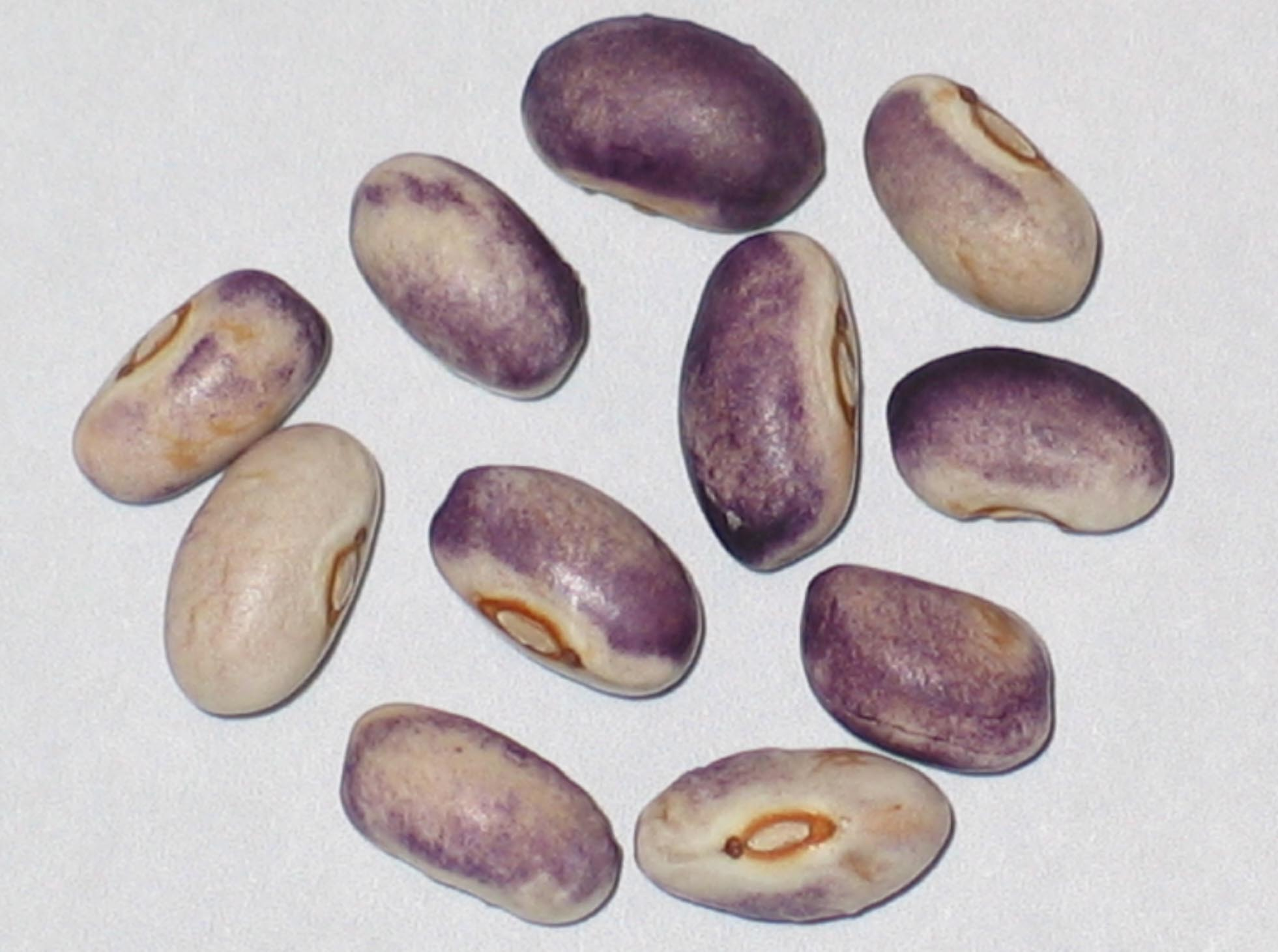 image of Purple Diamond beans