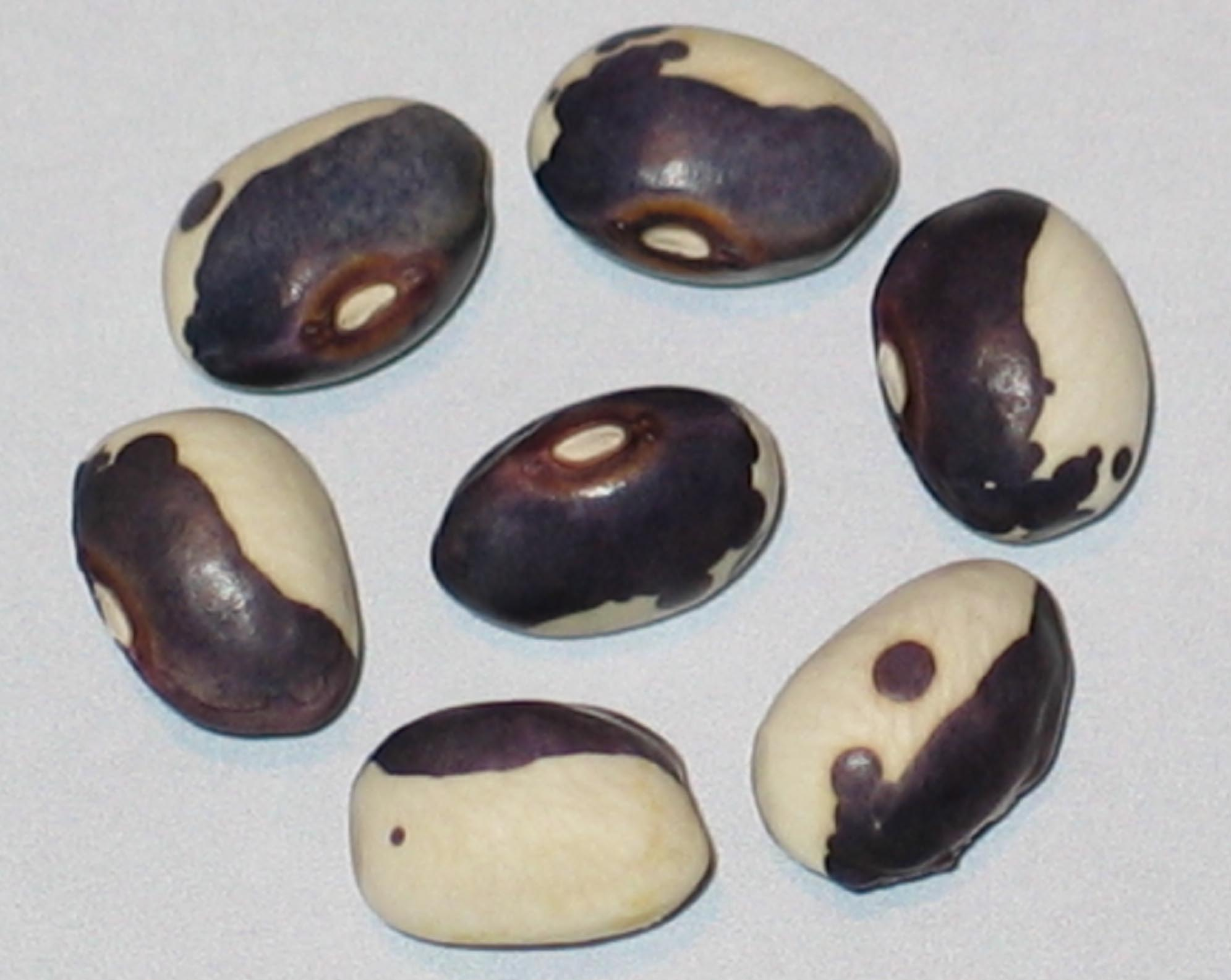 image of Purple Face beans