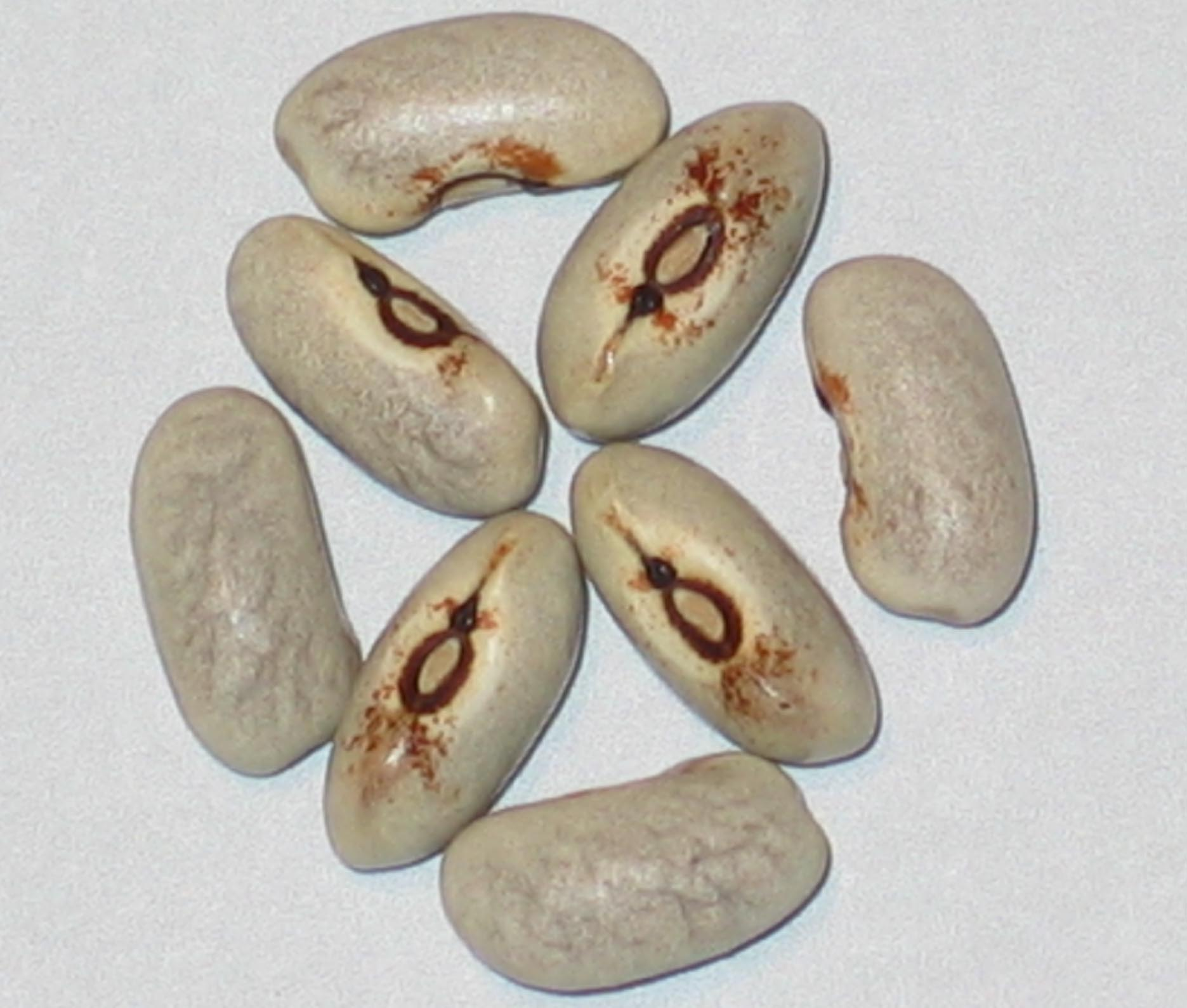 image of Purple Prince beans