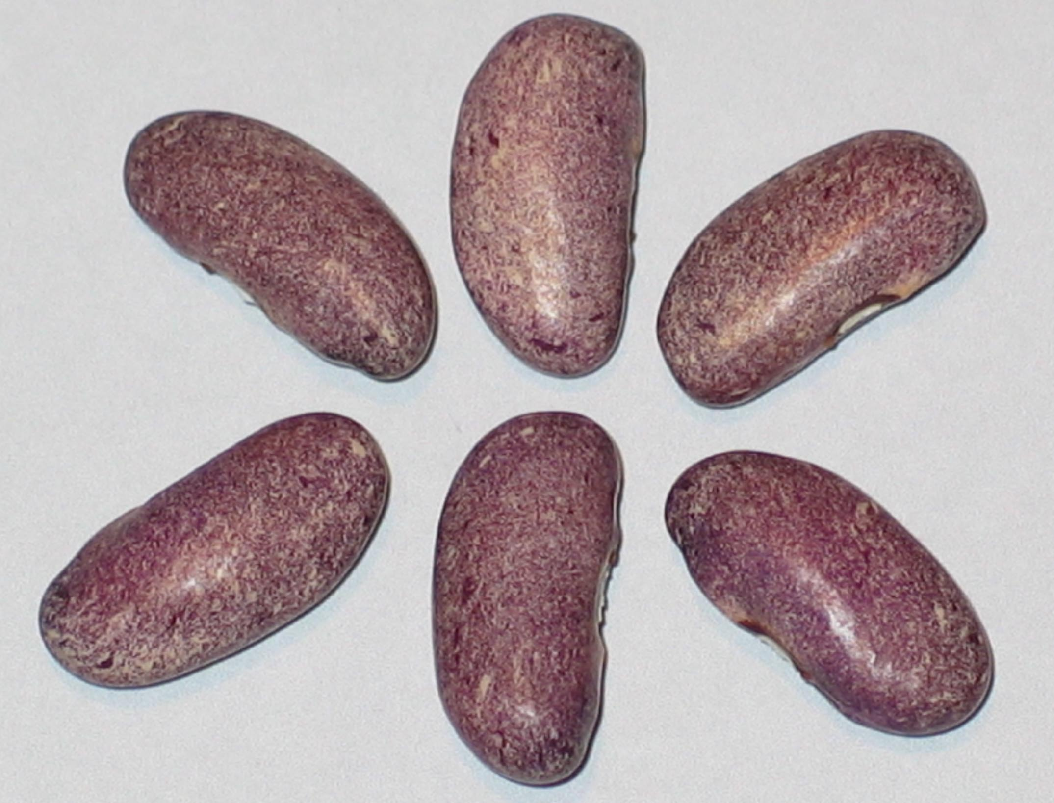 image of Purple Stardust beans