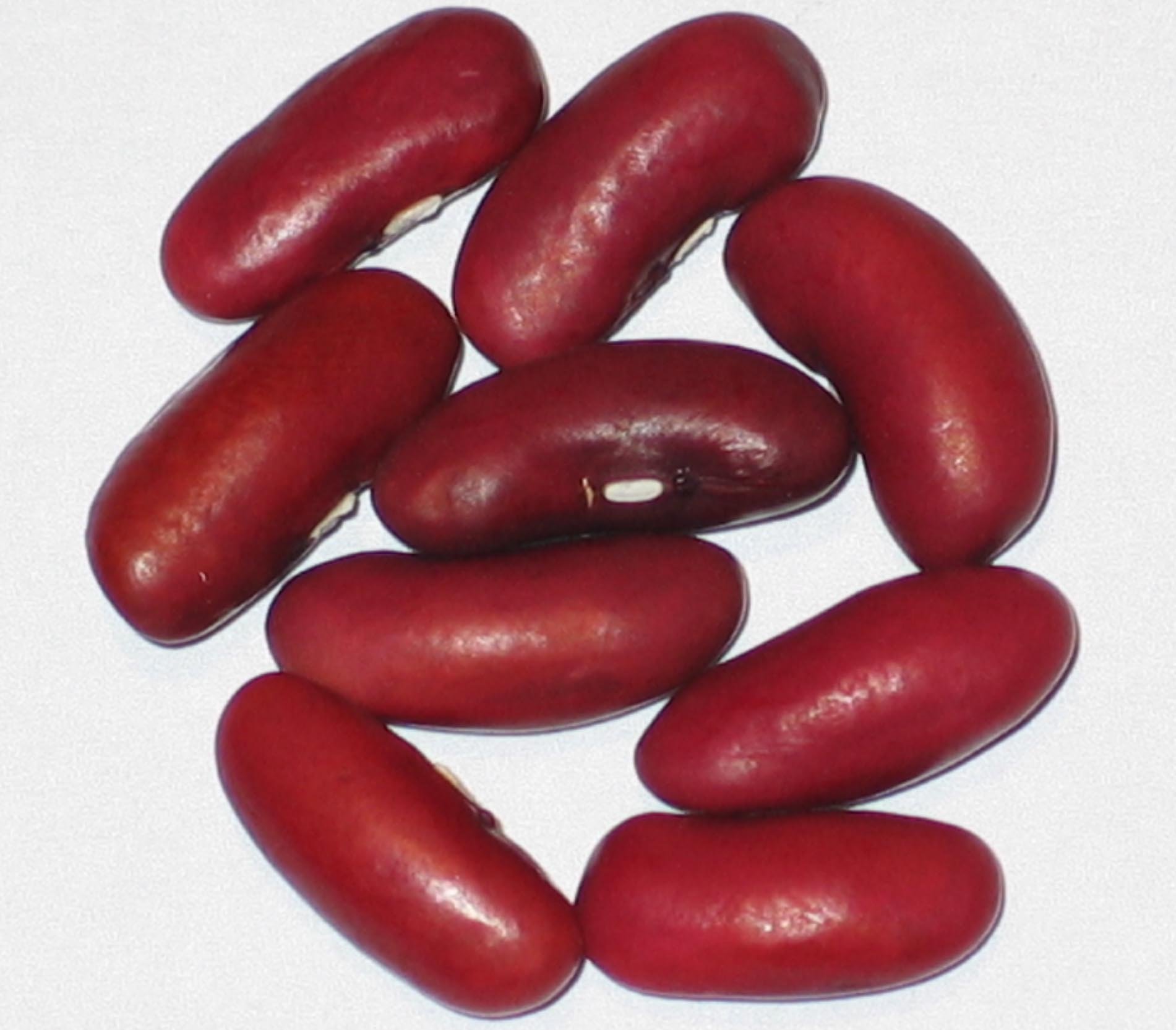 image of Red Sport beans