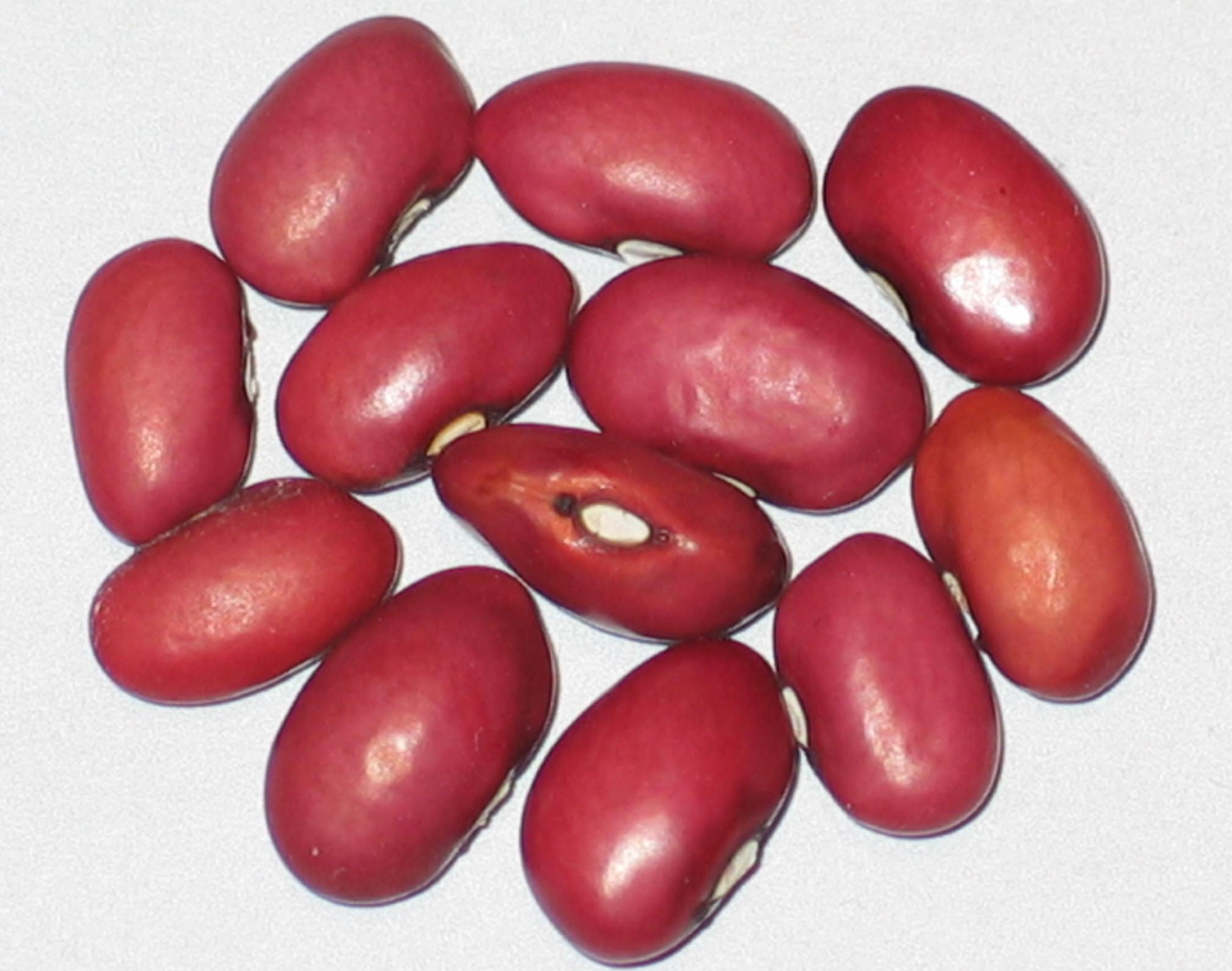 image of Red Turtle beans