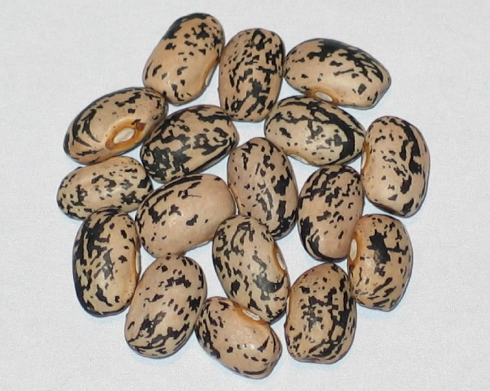 image of Refugee beans
