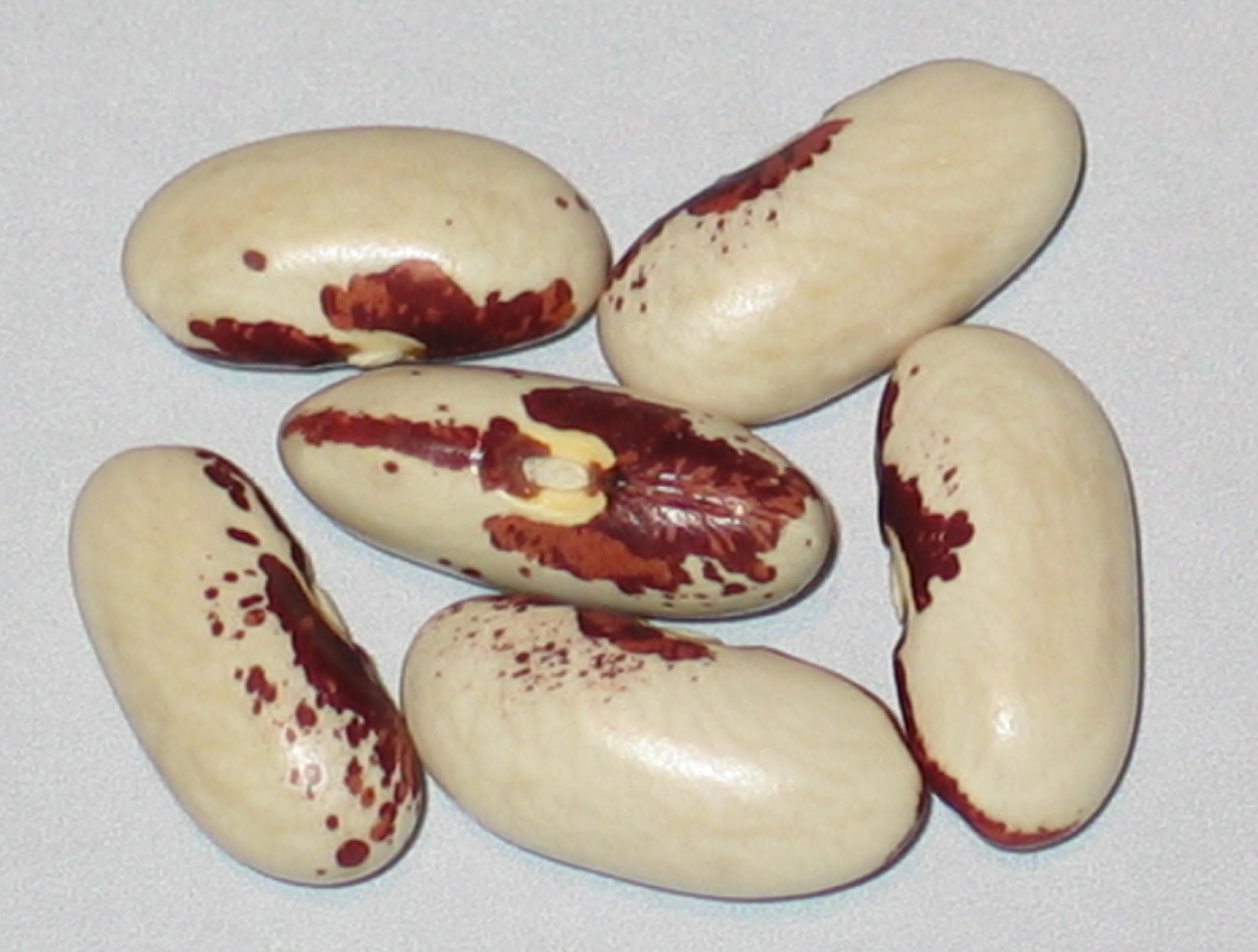 image of Rode Soldatenboon beans