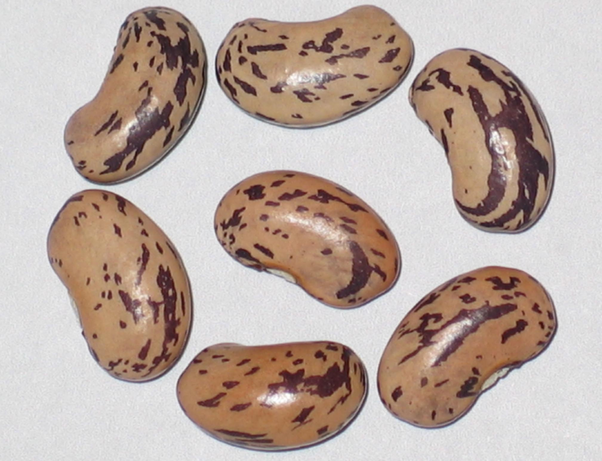 image of Ros D' Eyragues beans