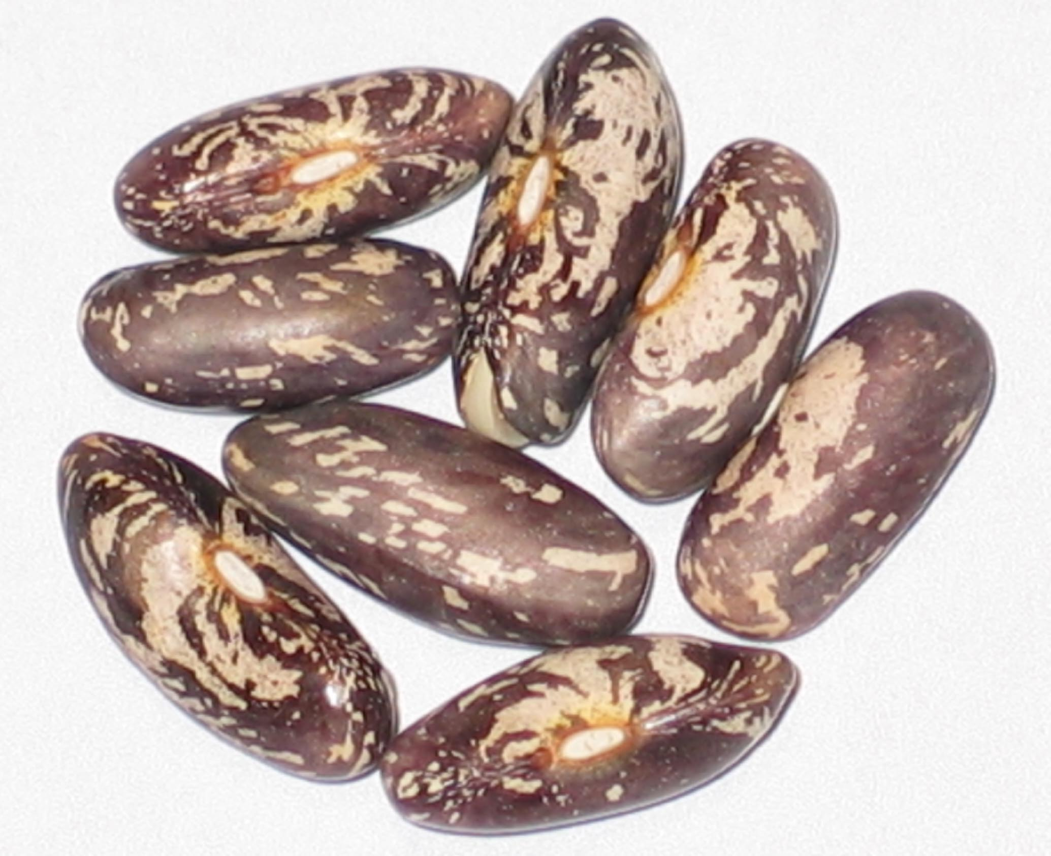 image of Seminole beans
