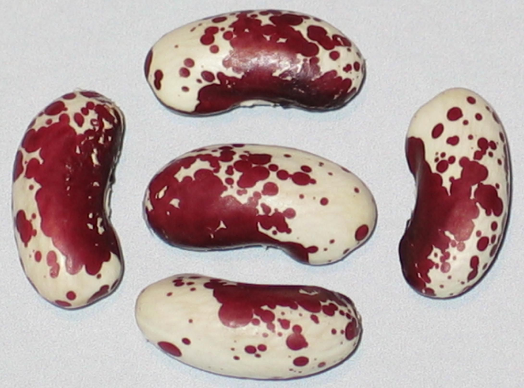 image of Speckled 1770 beans