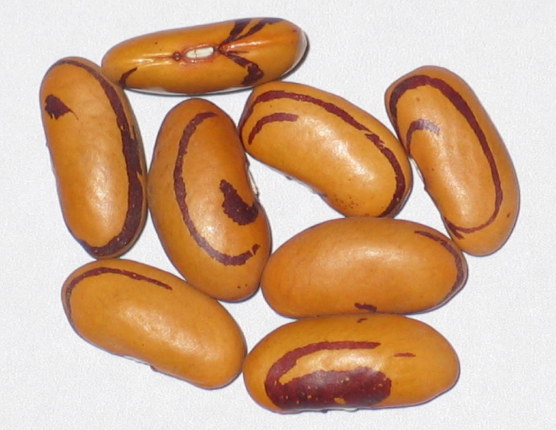 image of Tiger's Eye beans