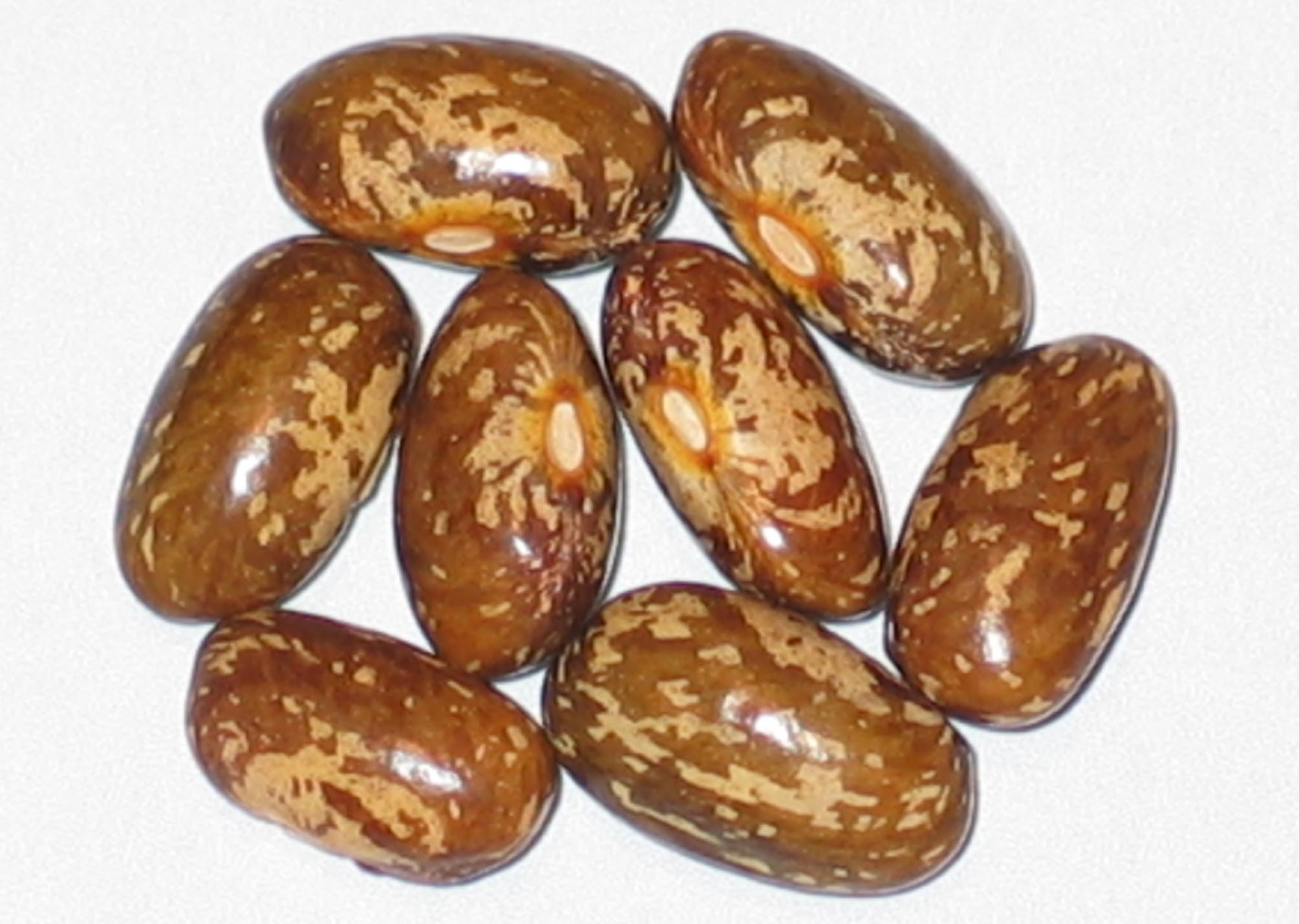 image of Topcrop beans