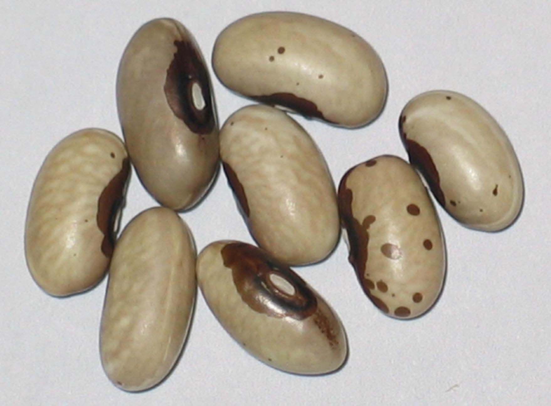 image of Victoria Brown Eyes beans