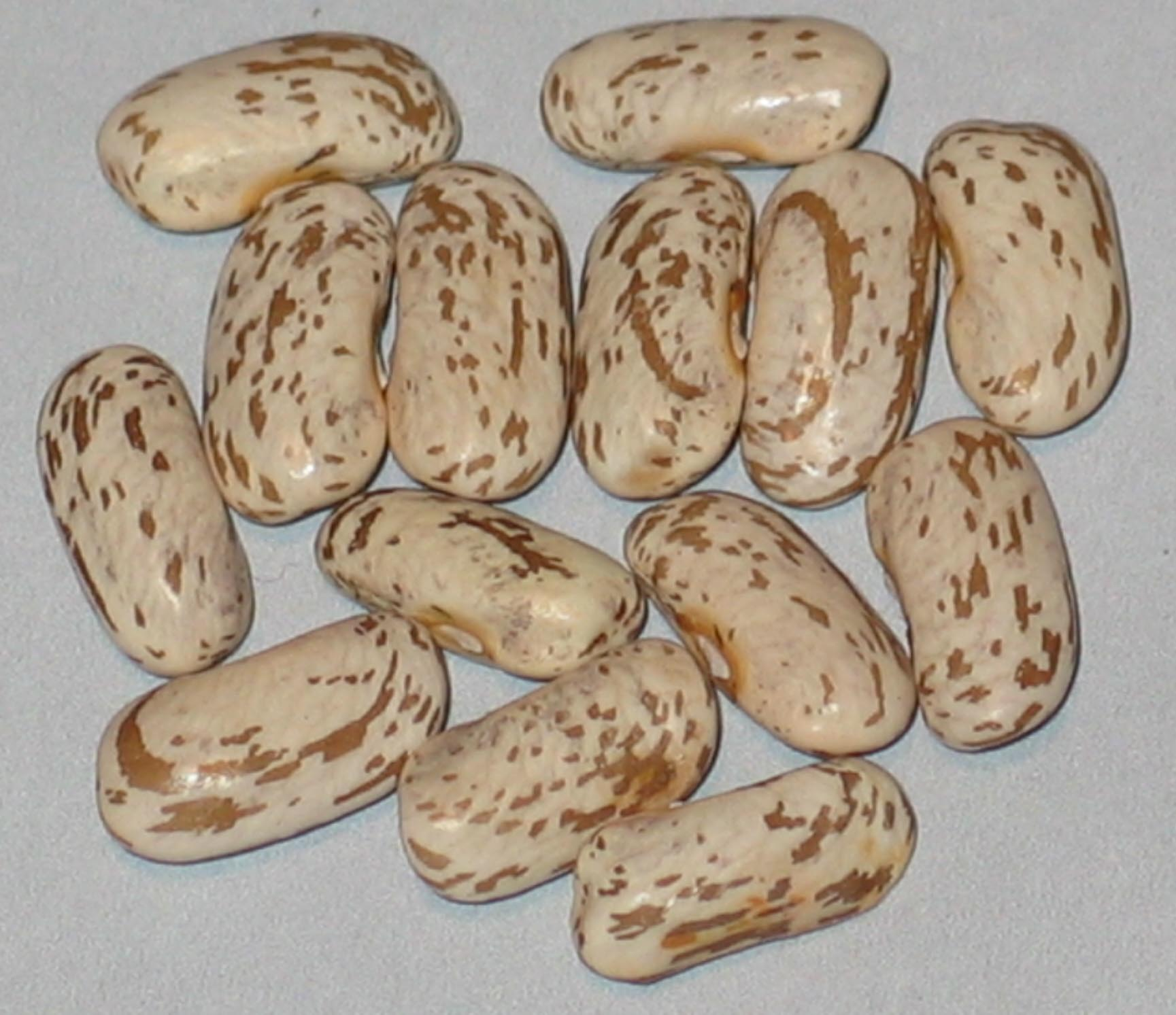 image of Willmar Pinto beans