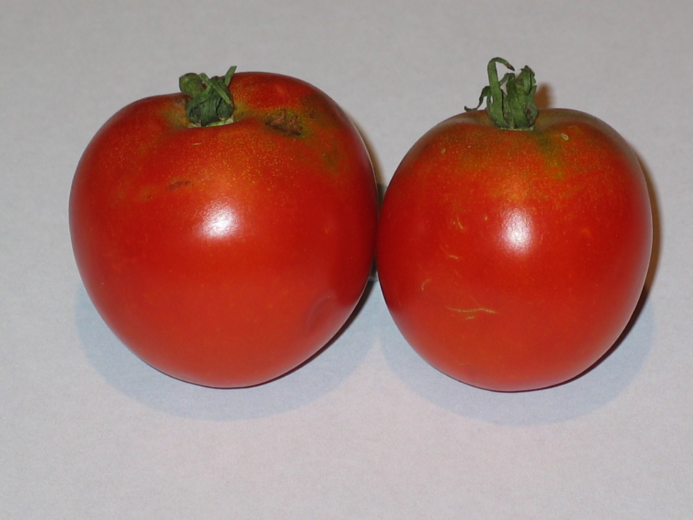 image of tomatoes that the plant on the left later produced