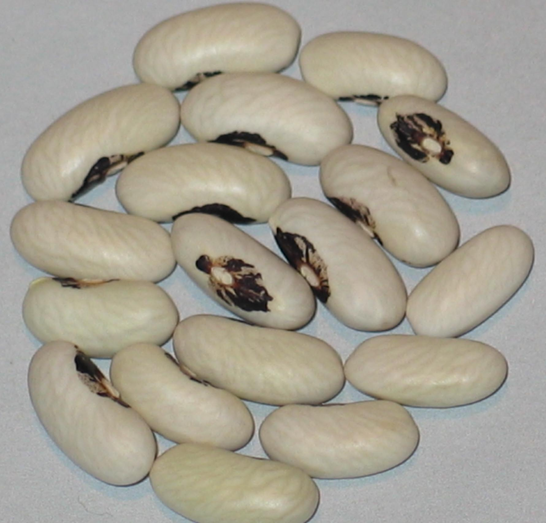 image of Apple Creek beans