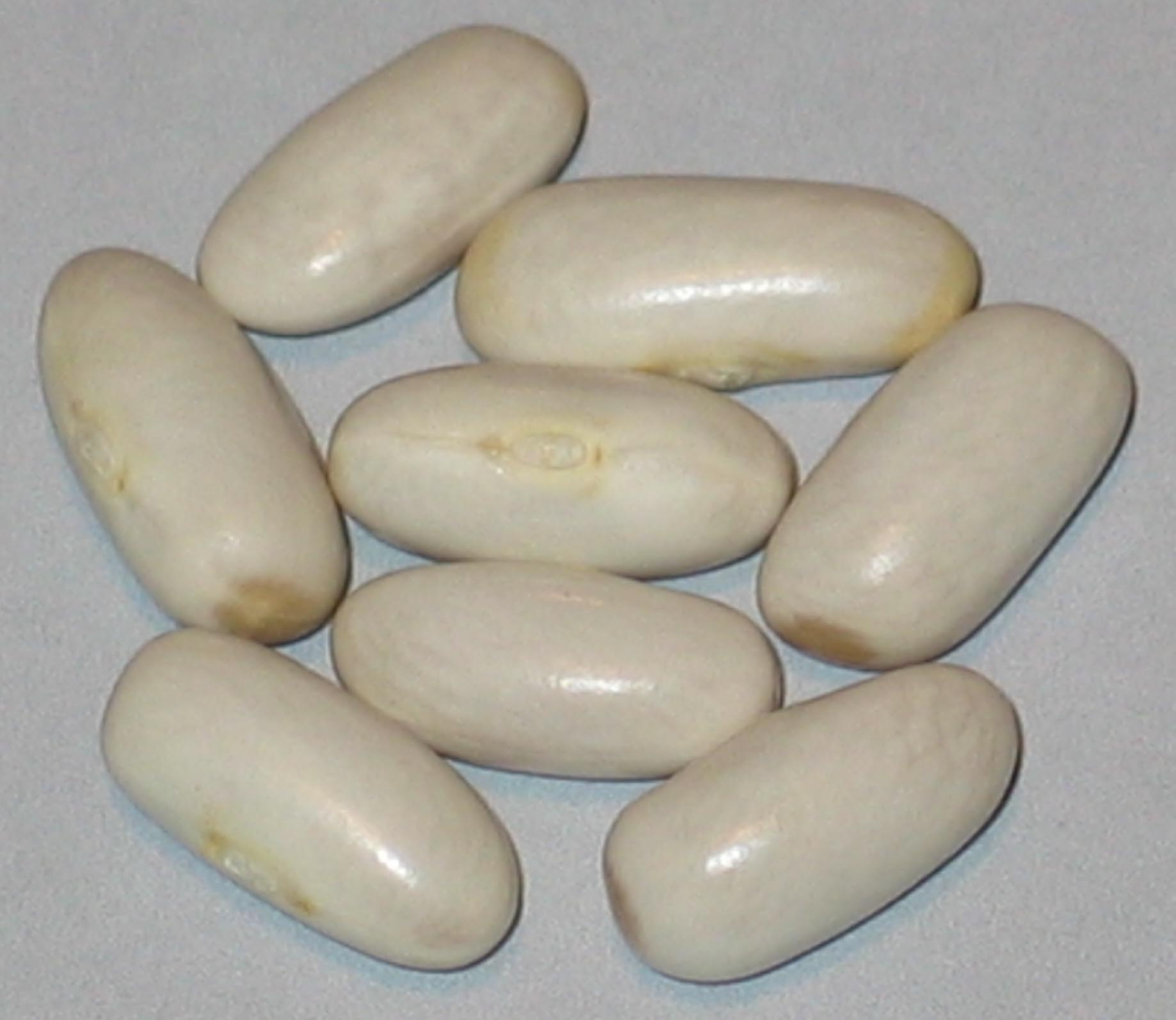 image of Argentinian White beans