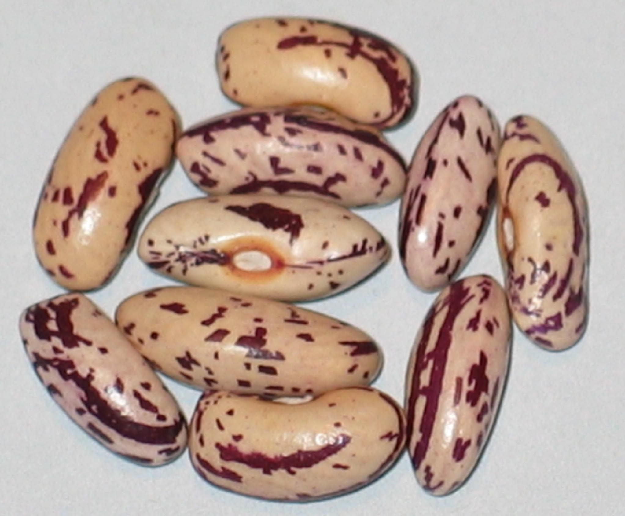 image of Avalon beans
