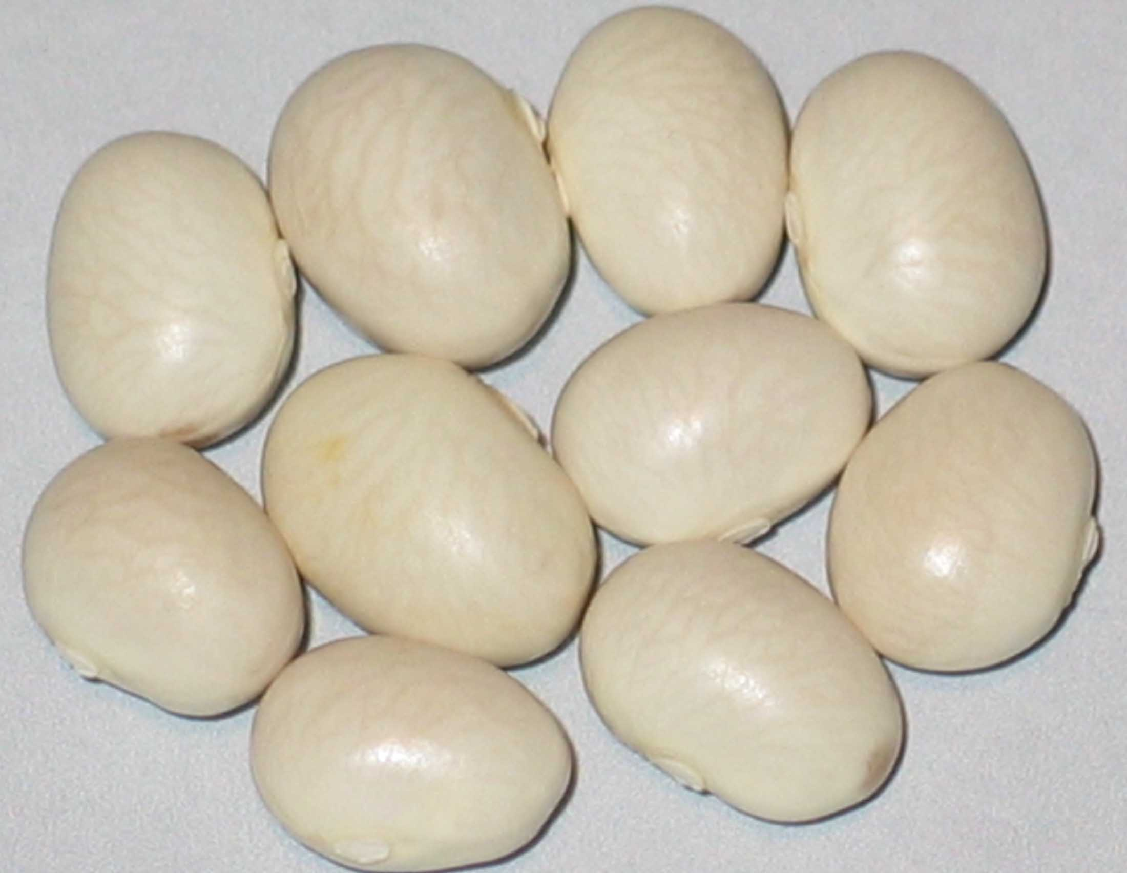 image of Belgishche Suppenbohne beans