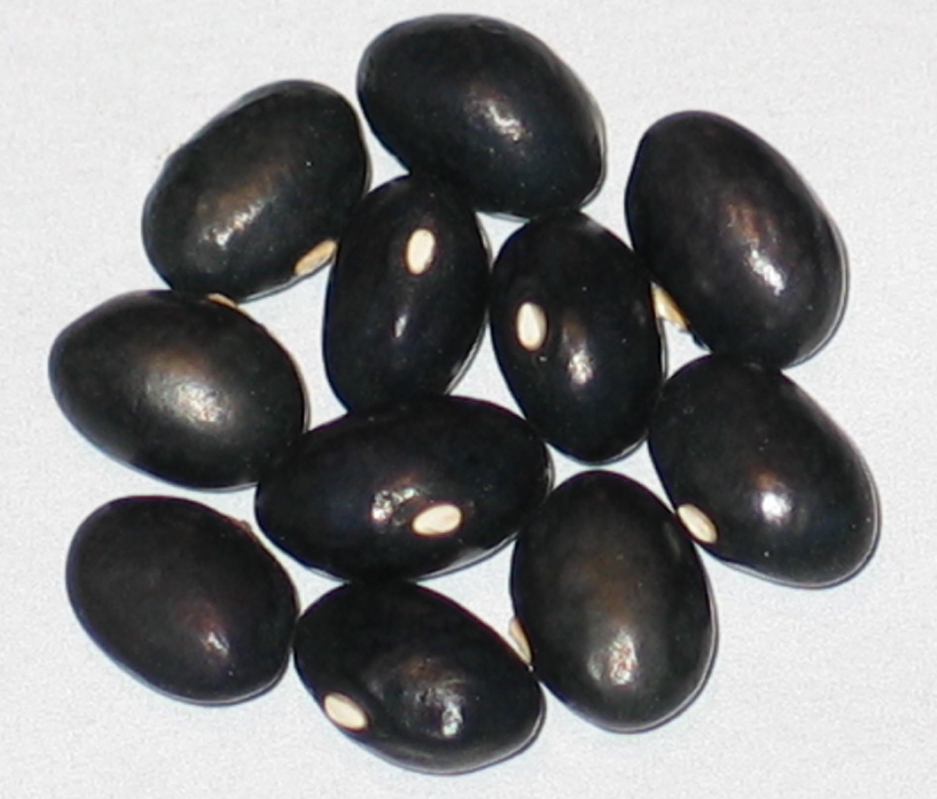 image of Black Horse beans