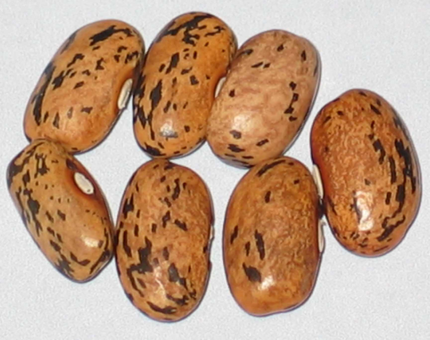 image of Blue Bloom beans
