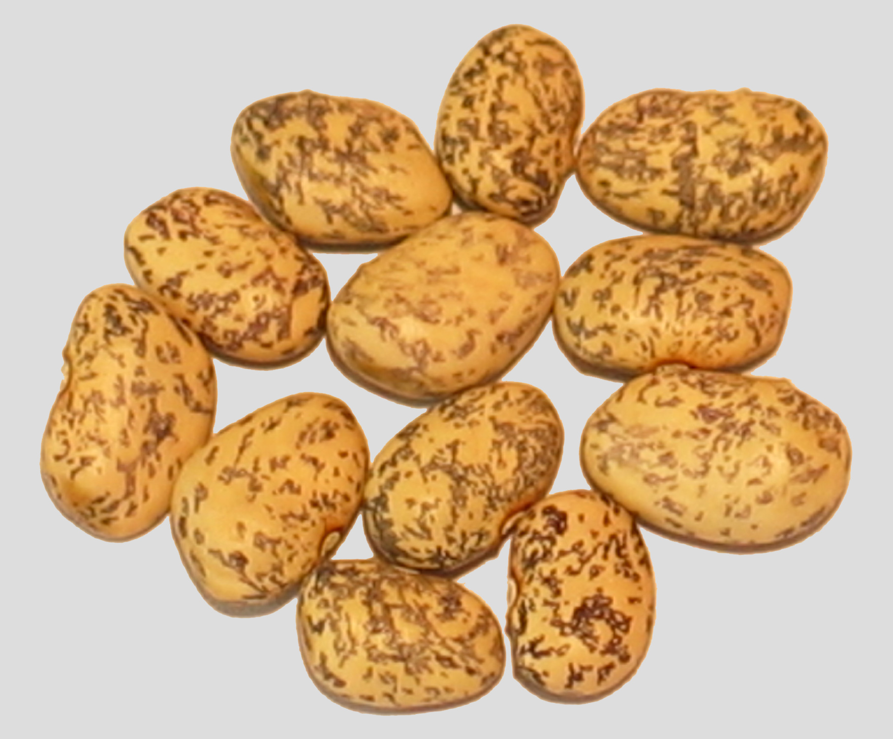 image of Blue Speckled Tepary beans